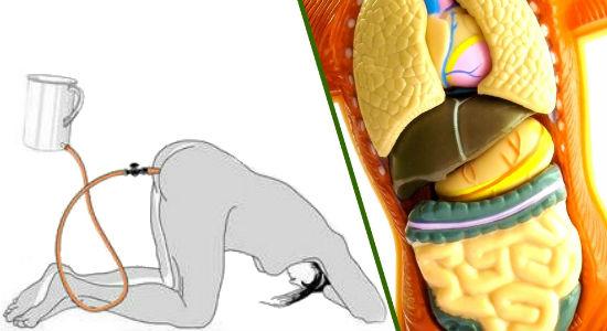 Клизма и кишечник